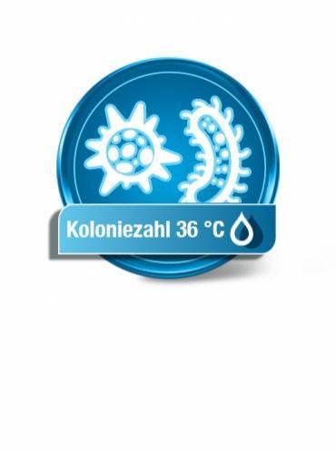 Koloniezahl 36 °C