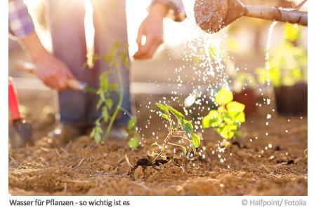 Wasser für Pflanzen