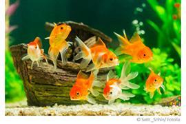 Aquarium Wasser
