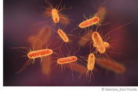 Kolibakterien im Trinkwasser – gefährliche Darmerreger